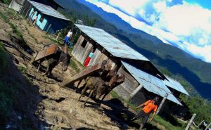 """""""Tierra de nadie"""": Investigación sobre el tráfico de tierras que amenaza a la Amazonía"""