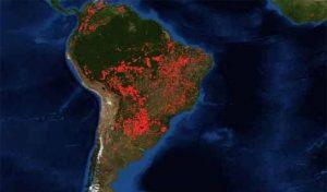 Obispos latinoamericanos levantan la voz por la Amazonía