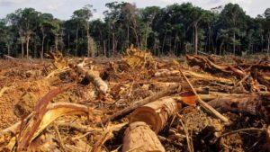 """Herlín Odicio, líder cacataibo: """"La tala ilegal y el narcotráfico nos siguen invadiendo en la cuarentena"""""""
