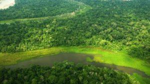 Deforestación en Amazonía peruana se habría reducido en más de 28% durante aislamiento social obligatorio