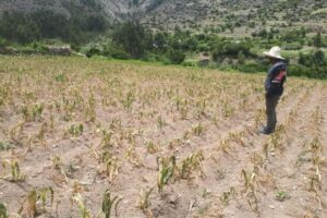Cusco: Agricultores piden apoyo para producir y abastecer alimentos