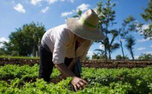 Moquegua: Impulsan ejecución de proyectos a favor del agro