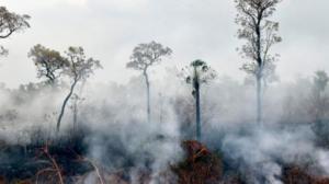 Brasil: Deforestación de la Amazonía se incrementó en un 67%